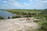 Woudbloem - Natuurgebied met ponies