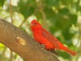 Birds -- Arizona, April 2009