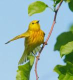 Birds -- New England, May 2009