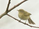 Birds -- Clissold Park, London, December 2009