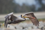 Birds -- Monterey Bay, February 2010