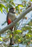 Birds -- Arizona, Spring 2010