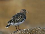 Birds -- Monterey Bay, September 2006