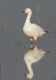 Birds -- Los Banos, November 2007