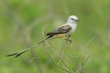 Birds -- Upper Texas Coast, April 2008
