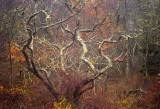 november wood 559