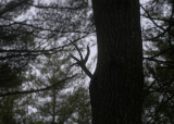 winter wood 204