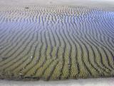 winter beach 041