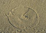 sundial 242