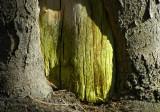 the green door 125