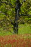 red field 227