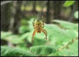 P1410398 Spider.jpg