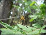 P1410409 Spider.jpg