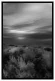 Evening_Dune_Saltbushes