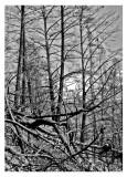 burnt_wood bw