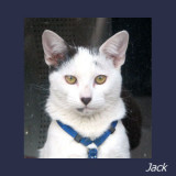 Mr Jack Pister