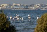 Bird sites