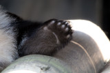 Fuzzy paw