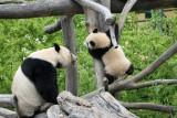 Fu Long & mother Yang Yang