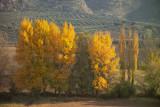 Extra Comparison Images - Kodak and Sigma - Autumn Trees