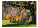Herbstfarben / autumn colors (2361)