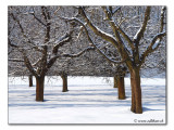 Baeume / trees (2919)