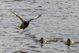 duck0.jpg