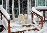 Snow Storm 19Dec09