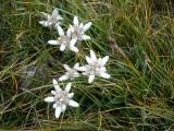 i com a premi (ja que no hi havia vistes)... un munt de flors de neu!!! són la meva flor preferida!!!