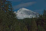 Mt Rainier from Longmire_01.jpg