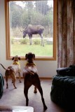 Dogs and Moose.jpg