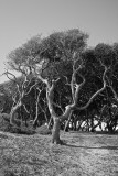 Grounds at Fort Fisher