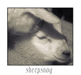 Sheepsnog