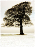 A46 snowtree, sepia