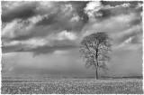 The Listening Tree, Kingscote, Glos
