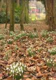 Rococco Gardens, Painswick, Glos.