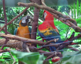 Resident parrots