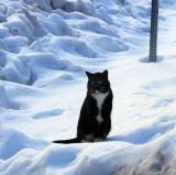 Stirling City cat