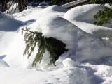 Drip-fed tree