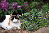 Lola in the garden