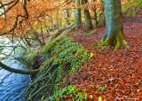 Autumn Colour.jpg
