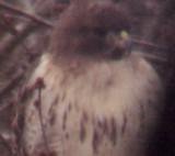 Birds of 2009