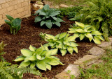 House - Flowers - 4-17-10 Hosta Bed