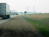 Coopers Hawk - Highway 61