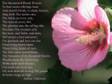 ten thousand flowers