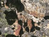 vivid color lichen
