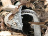 crowded mushroom