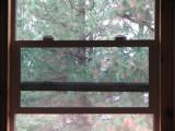 the window to it's soul