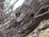 evil spirit in the wood