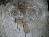 alien in the wood